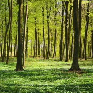 Fototapete Landschaft Endecken Natur Tapeten Bilderwelten