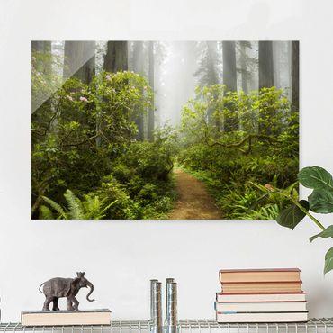 Glasbild - Nebliger Waldpfad - Quer 3:2