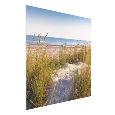 Forex Fine Art Print - Stranddüne am Meer - Quadrat 1:1