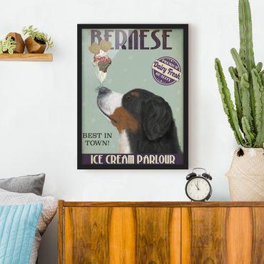Bild mit Rahmen - Berner Sennenhund mit Eis - Hochformat 4:3