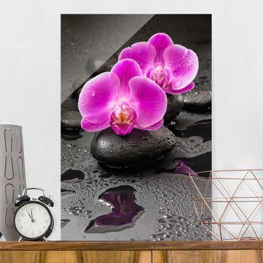 Glasbild - Pinke Orchideenblüten auf Steinen mit Tropfen - Hochformat 3:2