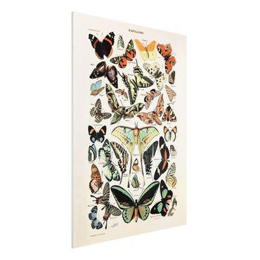 Forex Fine Art Print - Vintage Lehrtafel Schmetterlinge und Falter - Hochformat 4:3