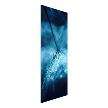 Forex Fine Art Print - Blaue Pusteblume im Regen - Panel