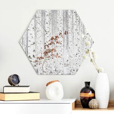 Hexagon Bild Alu-Dibond - Birken im Herbst