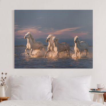 Leinwandbild - Wilde Pferde in Kamargue - Querformat 3:4