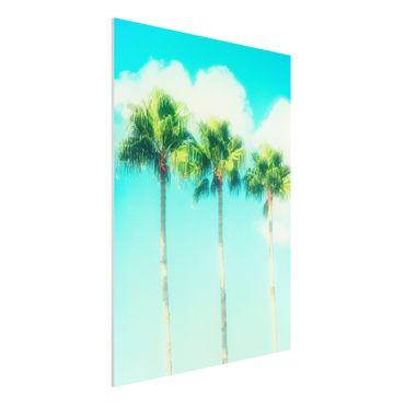 Forex Fine Art Print - Palmen vor Himmel Blau - Hochformat 4:3