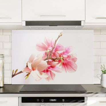 Spritzschutz Glas - Magnolienblüten - Querformat - 3:2