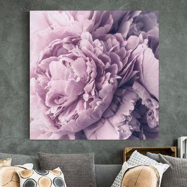 Leinwandbild - Lila Pfingstrosenblüten - Quadrat 1:1