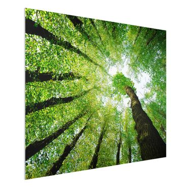 Forexbild - Bäume des Lebens