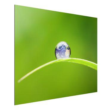 Alu-Dibond Bild - Grüne Hoffnung