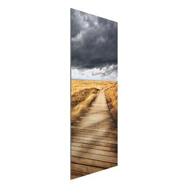 Alu-Dibond Bild - Weg in den Dünen