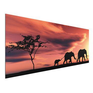 Alu-Dibond Bild - Savannah Elefant Family