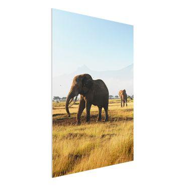 Forexbild - Elefanten vor dem Kilimanjaro in Kenya