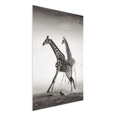 Forexbild - Giraffenjagd