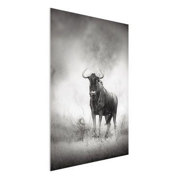Forexbild - Staring Wildebeest