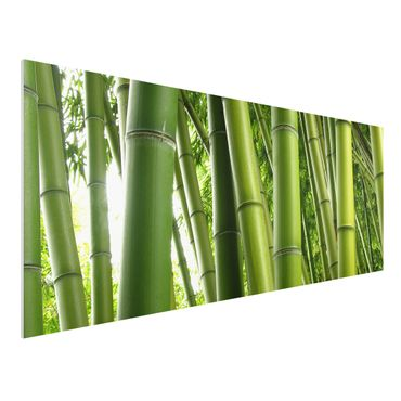 Forexbild - Bamboo Trees No.1