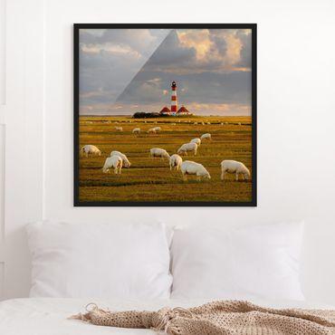 Bild mit Rahmen - Nordsee Leuchtturm mit Schafsherde - Quadrat 1:1