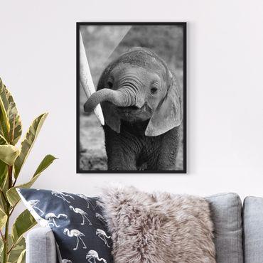 Bild mit Rahmen - Elefantenbaby - Hochformat 3:4