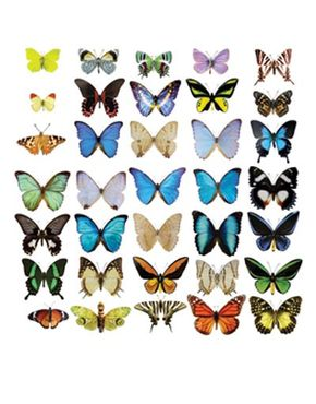 Fensterfolie - Fenstersticker No.51 Schmetterlinge Set II - Fensterbilder