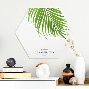 Hexagon Bild Forex - Tropisches Blatt Areca Palme