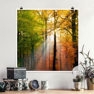 Poster - Morning Light - Quadrat 1:1