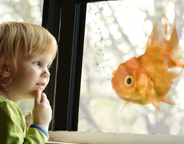 Fensterfolie - Sichtschutz Fenster Goldfish - Fensterbilder