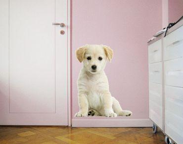 Wandtattoo Hund No.94 Süßer Weißer Welpe II