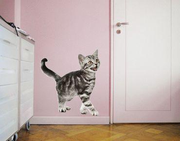 Wandtattoo Katze No.132 Miez
