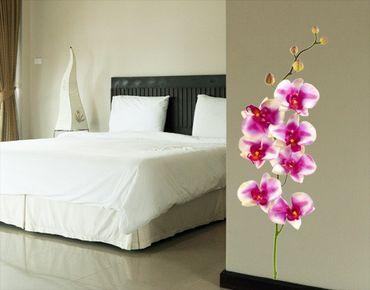 Wandtattoo Orchidee No.176 Orchidee Rosa I