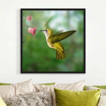 Bild mit Rahmen - Kolibri und Blüte - Quadrat 1:1