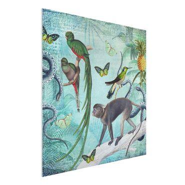 Forex Fine Art Print - Colonial Style Collage - Äffchen und Paradiesvögel - Quadrat 1:1