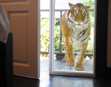 Fensterfolie - Fenstersticker No.127 Bengalischer Tiger - Fensterbilder