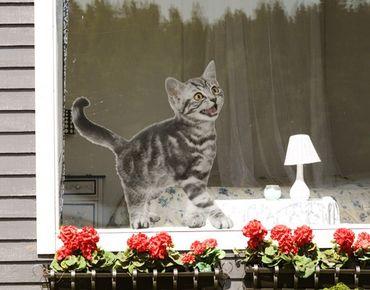 Fensterfolie - Fenstersticker No.132 Miez - Fensterbilder