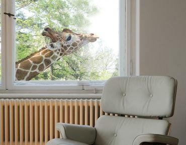 Fensterfolie - Fenstersticker No.302 suchende Giraffe - Fensterbilder