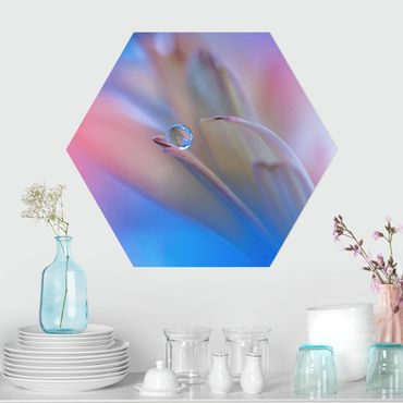 Hexagon Bild Forex - Touch Me Softly