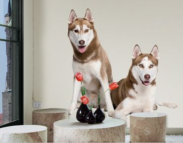 Wandtattoo Hund No.358 Husky Pair