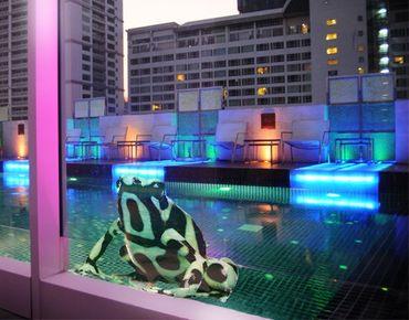 Fensterfolie - Fenstersticker No.280 Zebra Frog - Fensterbilder