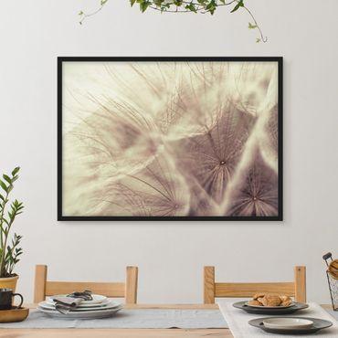 Bild mit Rahmen - Detailreiche Pusteblumen Makroaufnahme mit Vintage Blur Effekt - Querformat 3:4