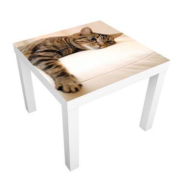 Möbelfolie für IKEA Lack - Klebefolie Cat Chill Out