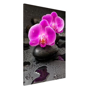 Magnettafel - Pinke Orchideenblüten auf Steinen mit Tropfen - Memoboard Hochformat 3:2