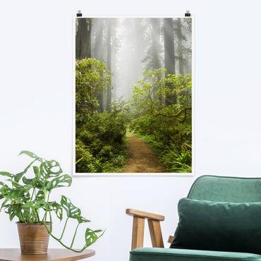Poster - Nebliger Waldpfad - Hochformat 3:4