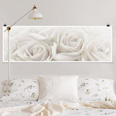 Poster - Weiße Rosen - Panorama Querformat