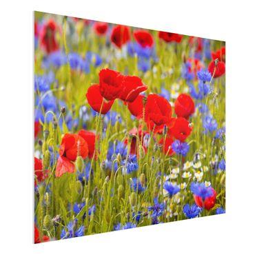 Forex Fine Art Print - Sommerwiese mit Mohn und Kornblumen - Querformat 3:4