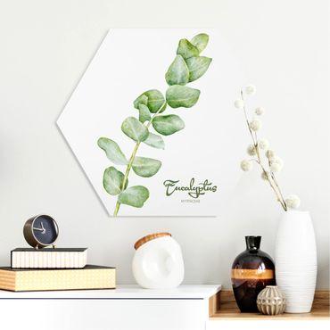 Hexagon Bild Forex - Aquarell Botanik Eukalyptus
