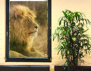 Fensterfolie - Sichtschutz Fenster Löwenkönig - Fensterbilder