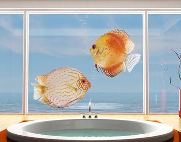 Fensterfolie - Fenstersticker No.613 Discus Set - Fensterbilder