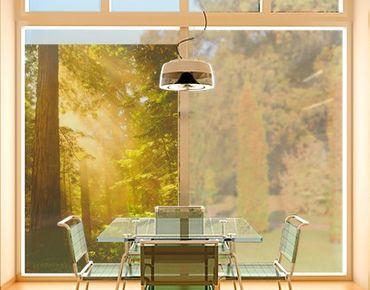 Fensterfolie - Sichtschutz Fenster Morgengold - Fensterbilder