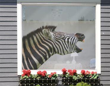 Fensterfolie - Sichtschutz Fenster Brüllendes Zebra - Fensterbilder