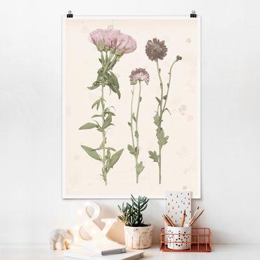 Poster - Herbarium in rosa III - Hochformat 3:4