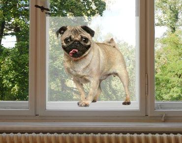 Fensterfolie - Sichtschutz Fenster Mopsfidel - Fensterbilder